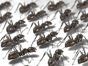 NJ Ant Control-South Jersey Ant Control