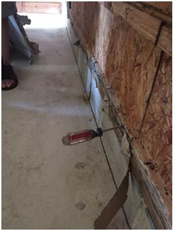 Termite Pest Control NJ